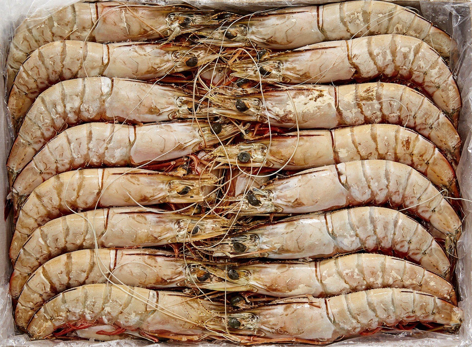 Camarão banana Moçambique 10-20