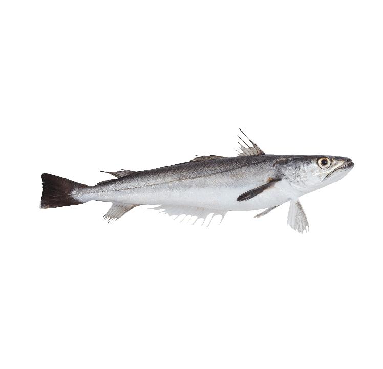 pescada-04