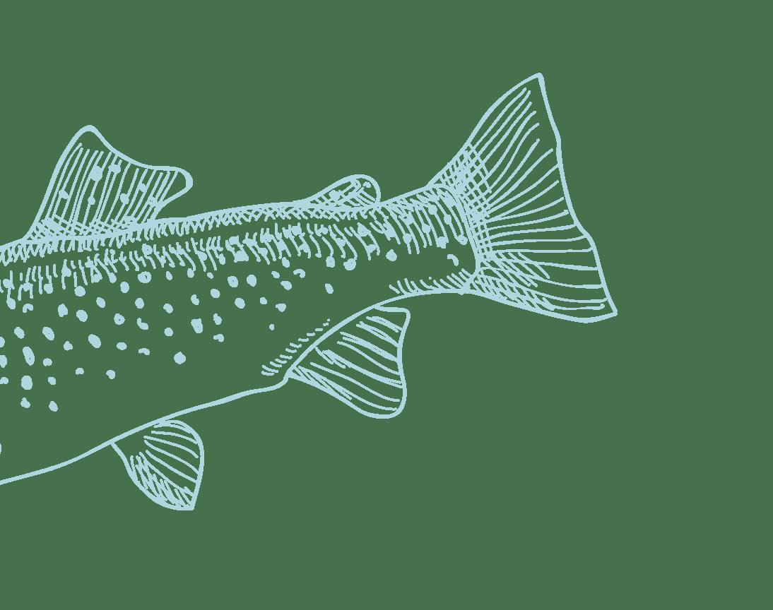 salmão 1
