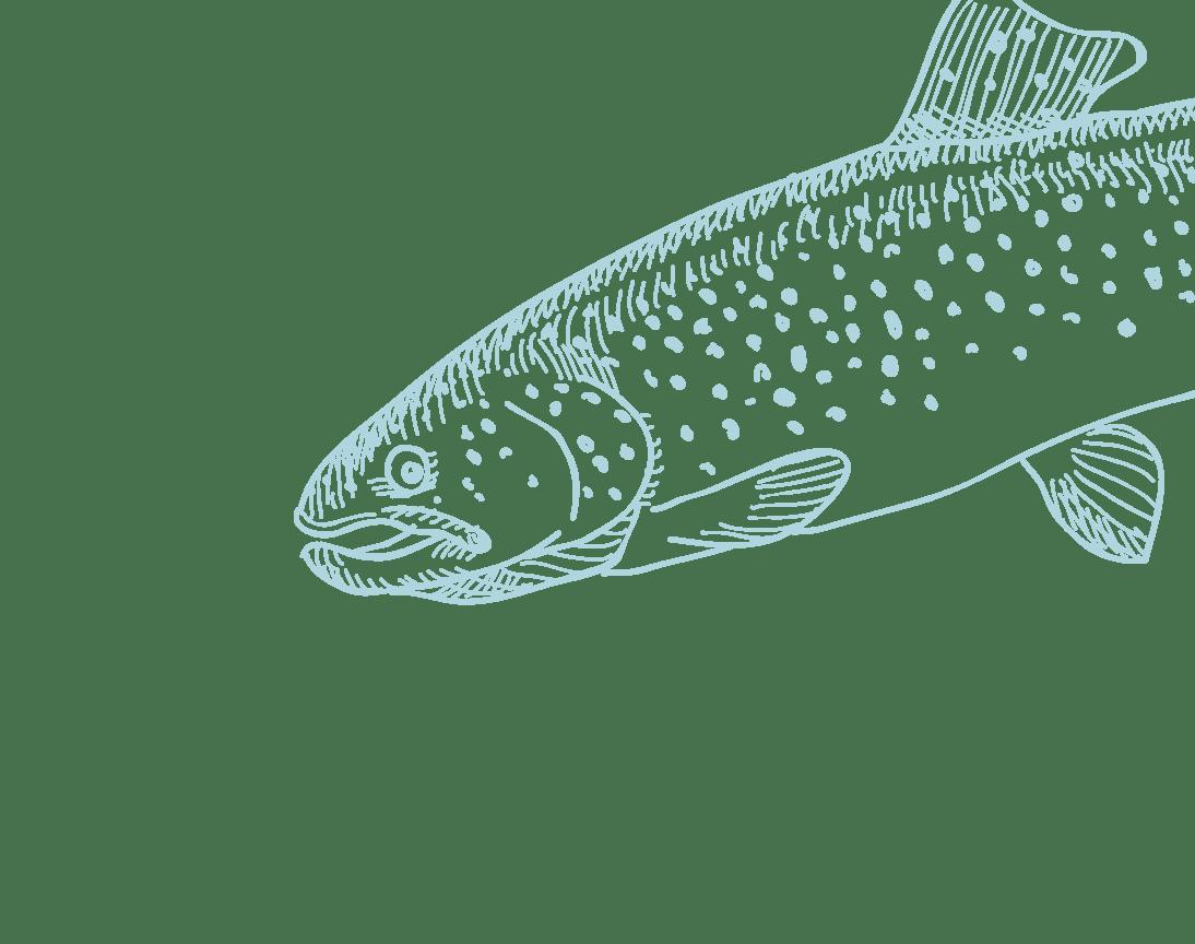 salmão2
